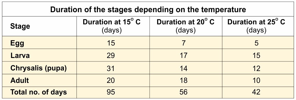 Duration of the stages depending on the temperature